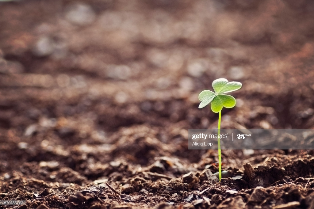 Green clover isolated on earth background